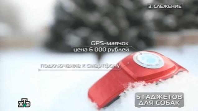 GPS-ошейник X-pet стал главным открытием передачи «Чудо техники»