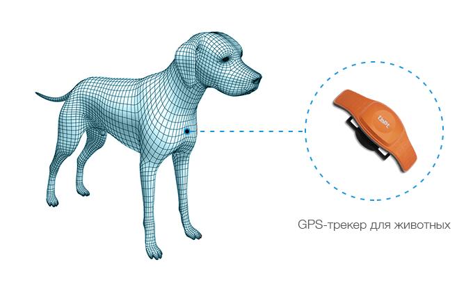 GPS-трекер для животных