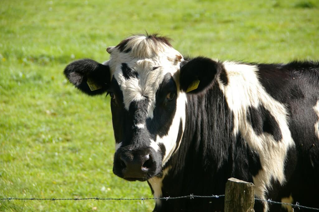 Использовать GPS-маяк для наблюдения за животными