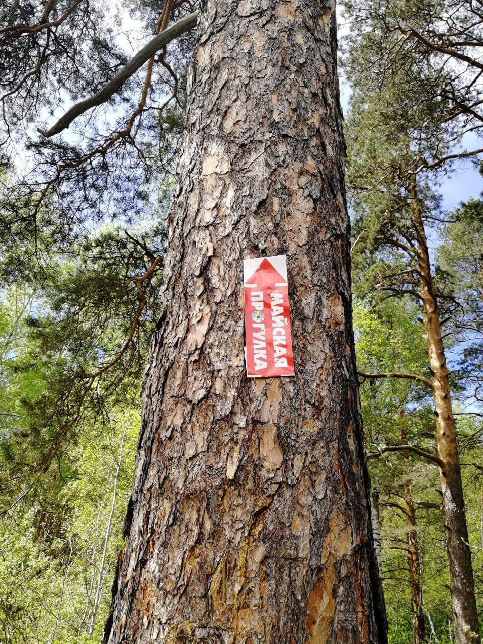 Организаторы Майской прогулки расклеили стрелки на деревьях