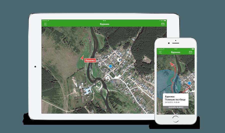 Точное местоположение. Находите животное по GPS на онлайн-карте с точностью до 5 метров.